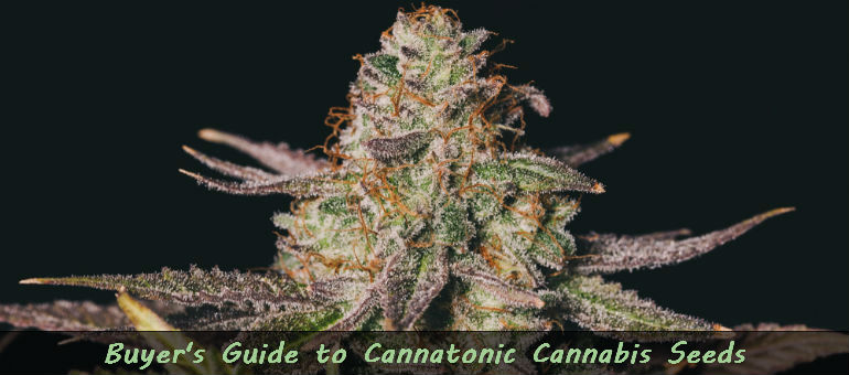 Cannatonic Cannabis Seeds