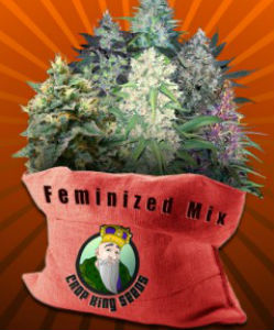 Crop King Feminized Mix Pack