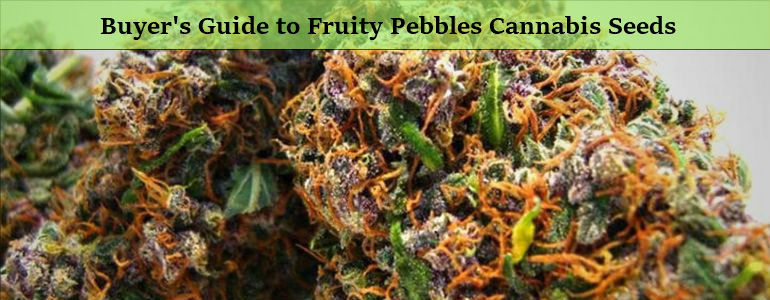 Fruity Pebbles Cannabis Seeds
