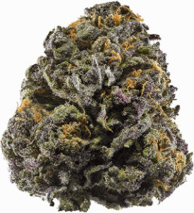 Granddaddy Purple Cannabis Seeds Bud