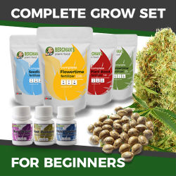ILGM Beginners Marijuana Grow Kit