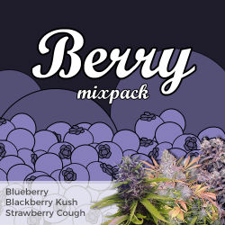 ILGM Berry Mix Seed Pack