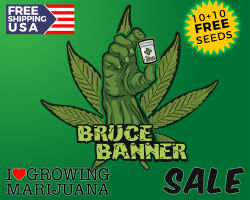 ILGM Bruce Banner Promotion