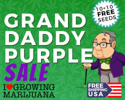 ILGM Grand Daddy Purple Promotion