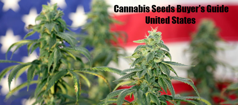 Buying Cannabis Seeds in United States