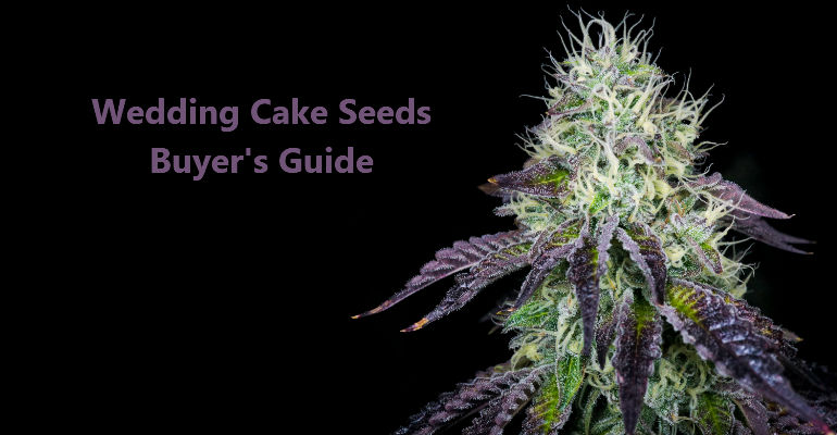 Wedding Cake Seeds | 2020 Exclusive Buyer's Guide - CNBS