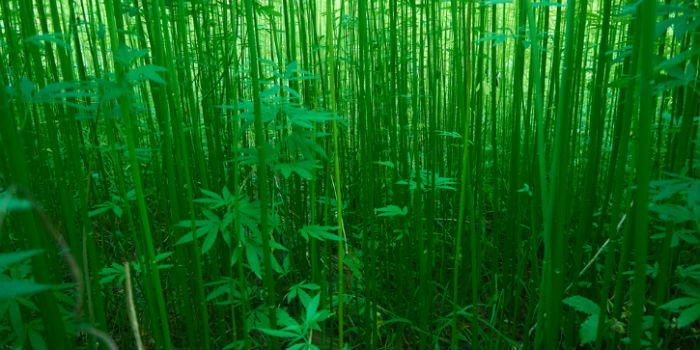 What Is Hemp? A 101 Guide - CNBS