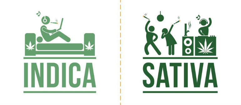Difference Between Indica and Sativa High