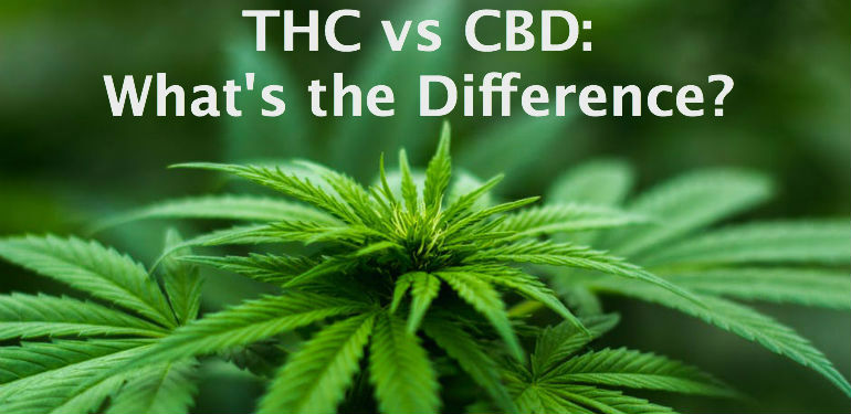 Rumored Buzz on Cbd Vs. Thc – Differences – Quality – Functional Medicine,Some Ideas on Cbd Vs Thc: What's The Difference? – Growing Organic You Should Know