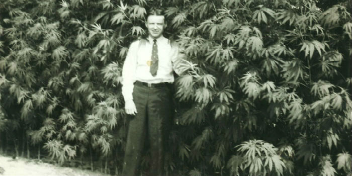 Why Was Hemp Made Illegal In 1937